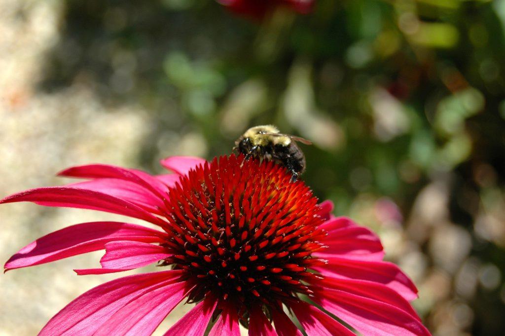 flower-682949_1920